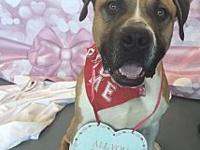 Rock's story At Wags and Whisker's Pet Rescue: For