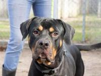 Rock's story Rock is a Rottweiler mix that is about to