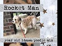 Rocket Man's story You can fill out an adoption