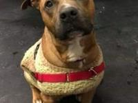 Rocko's story Looking for a handsome, older-but-not-old
