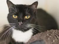 Rocky's story Hi, I'm Rocky. I love to be petted and