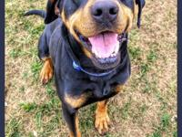 Rocky is a dashing hound mix who is about 3 years old.