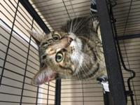 Meet Partners for Pets' adoptable cats at the Glen