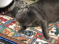 Rocky's story Handsome Rocky wonders if his forever