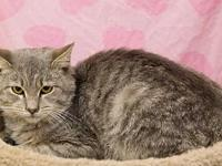 Rocky's story Adoption fee for cats is $65.00 which