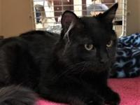 Rocky's story Are you looking for a new feline friend