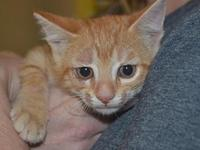 Rocky's story Meet Rocky! Rocky is a 8 week old, male,