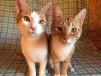 Rocky and Mickie are a perfect pair of bonded brothers.
