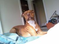 Description rocky is a one year old rednose pit. he is