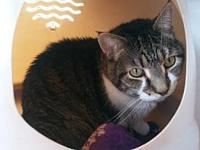 Rocky (bonded to Jewel)'s story 12 year old neutered