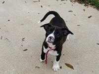 Rocky's story Rocky is a playful 11 week old Lab /