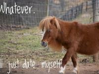 This little small miniature horse belonged to an older