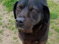 Rodeo is a sweet boy that likes to play and is looking