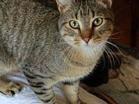 Roger's story The most perfect cat - good natured and