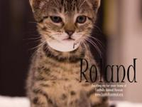 Hi, Im Roland! I am a sweet, happy, active, playful