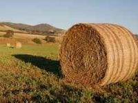 Rolled hay bales for sale. 4 x 5. $25/ cash. Call