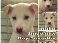 Rollo from Korea's story My name is Rollo from