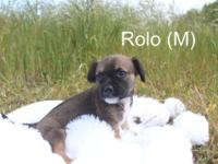 Little, tiny Rolo will be is 8 weeks old before he will