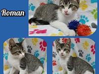 Roman's story Our adoption fee is 80.00 which covers