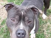 Roman is a big, handsome 2 year old, neutered male who