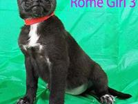 Rome Girl #3's story ADOPTION APPLICTAION: