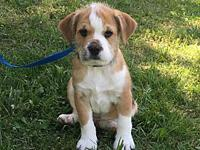 Romeo's story I am a 12 week old mixed puppy. My breed