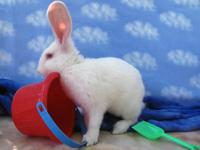 Romeo is one of 46 special rabbits saved by the