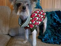 Romeo is a 10 yr old Chinese Crested. Total love bug.