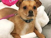 Romeo-Pending!'s story This sweet and well behaved