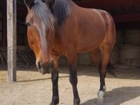 Romeo is a all around horse, he enjoys jumping, trails,