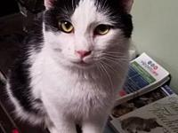 Romulus's story *SPECIAL* ALL CATS OVER 1 YEAR ARE $50