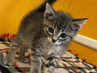 Ron's story Ron came in with his brother and sister.