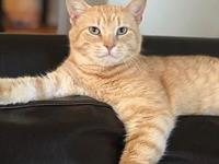 Ron Weasley's story Ron Weasley is an outgoing cat with