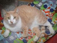Ronnie's story 19CH0053 . I am a friendly cat who