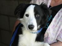 This is Roo. Shes an 8 month old Border Collie mix.