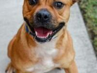 Roo's story Hi, my name is Roo! I am a sweet boxer mix