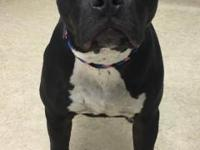 ROO is a pretty, 1 year old Pit Bull Terrier blend. She