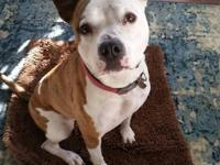 Rooby is a Pit Bull Terrier who was born October 25,