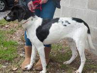RooRoo was found as a stray.  approx. 2yo.  very