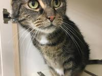 Hi! I'm Rori. I was turned into the local shelter [with