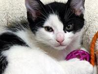 Rorschach's story Rorschach is a sweet, loving little