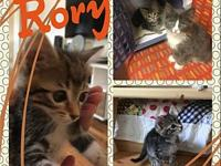 Rory's story Hi, my name is Rory. I'm a bit on the