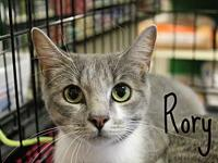 Rory's story The adoption fee is $85.00 with an