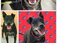 ROSA's story ROSA - F, Lab Mix, 7-8 years old. Rosa is