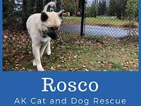 My story Rosco is available for adoption !He is a 5