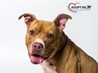 Rosco's story Rosco is a player. This handsome guy is