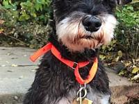 Rosco's story Hi all, My name is Rosco. I am 9 year