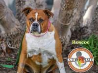 Please welcome Roscoe !! Roscoe comes to us from a