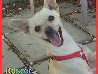 Roscoe's story Hi friends my name is Rosco. Im a 2 year