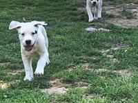 My story Roscoe and Xena are 4-5 month old pups needing